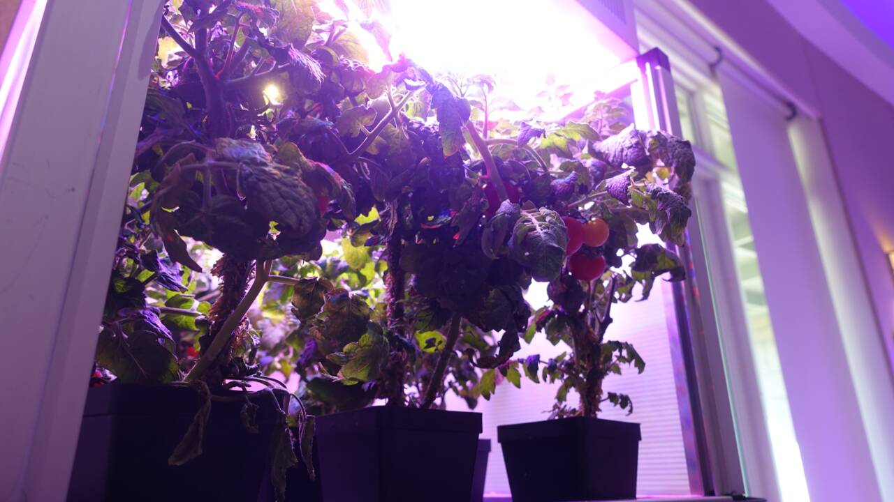 Jardiner dans l'espace, un défi pour les futurs explorateurs