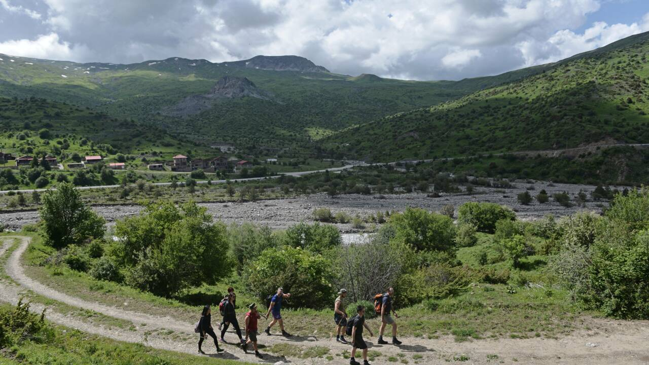 Plantes médicinales : la Grèce confrontée à un assaut des cueilleurs albanais