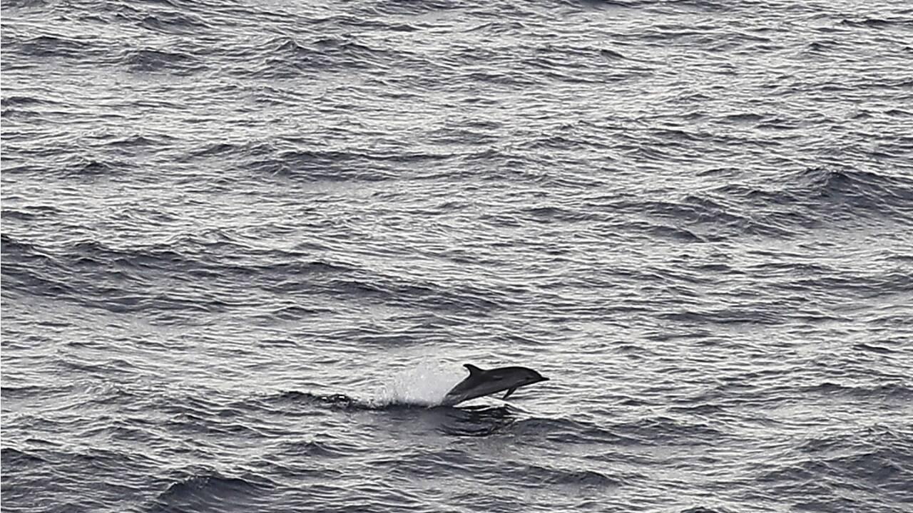 En Méditerranée, cétacés, bateaux et touristes ne font pas toujours bon ménage