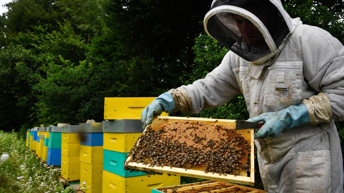Le Canada veut interdire des pesticides nocifs pour les abeilles et les insectes aquatiques