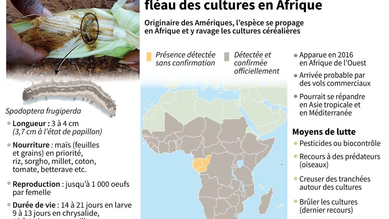 L'Afrique australe se mobilise contre une invasion de chenilles