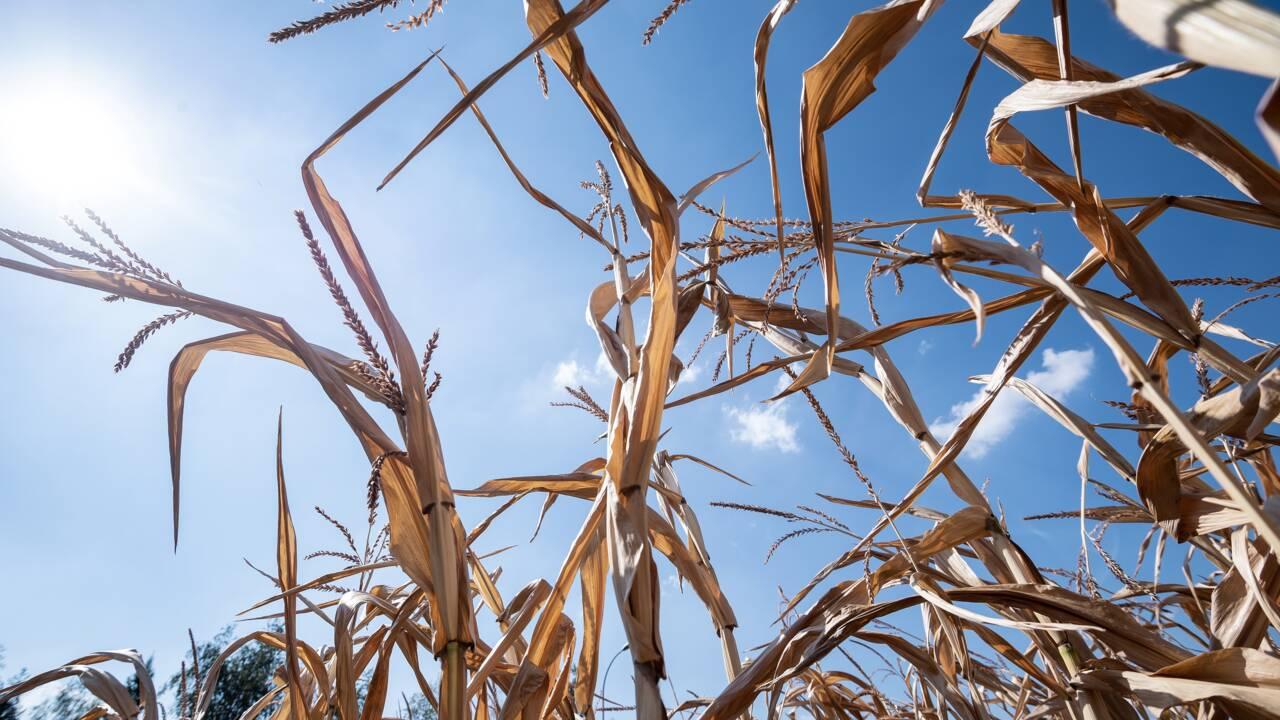 Agriculture: après la sécheresse, la guerre de l'eau