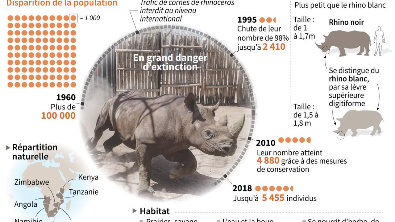 Tchad: mort de deux des six rhinocéros noirs réintroduits en mai