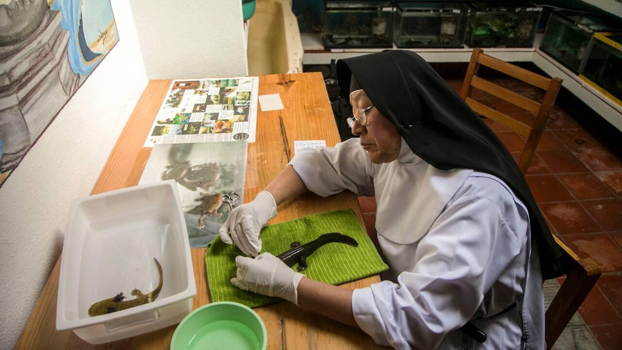 Un monastère mexicain, dernier refuge de salamandres aquatiques