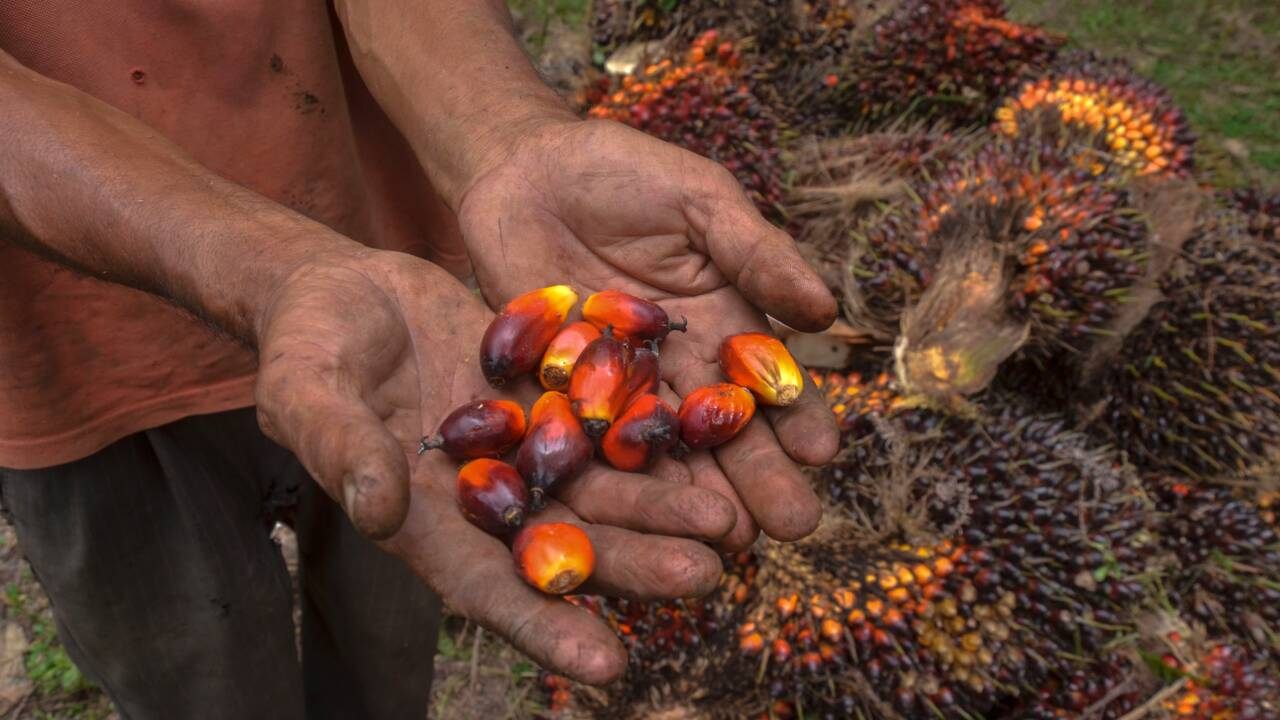 Les petits producteurs d'huile de palme d'Asie du Sud-Est voient l'avenir en noir