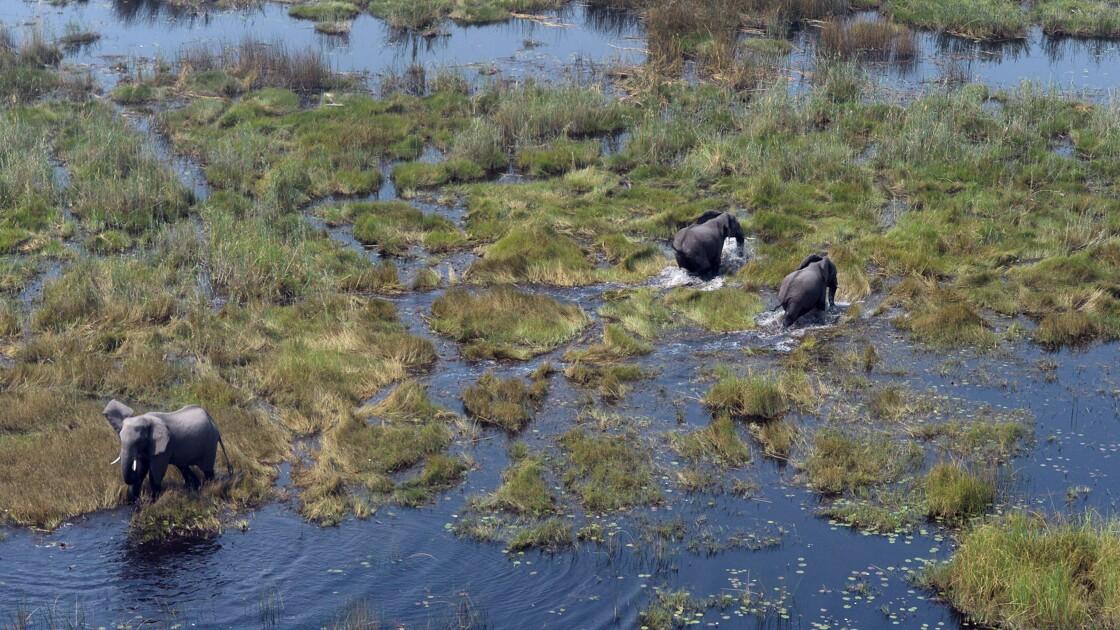 Botswana: réactions passionnées après le rétablissement de la chasse aux éléphants