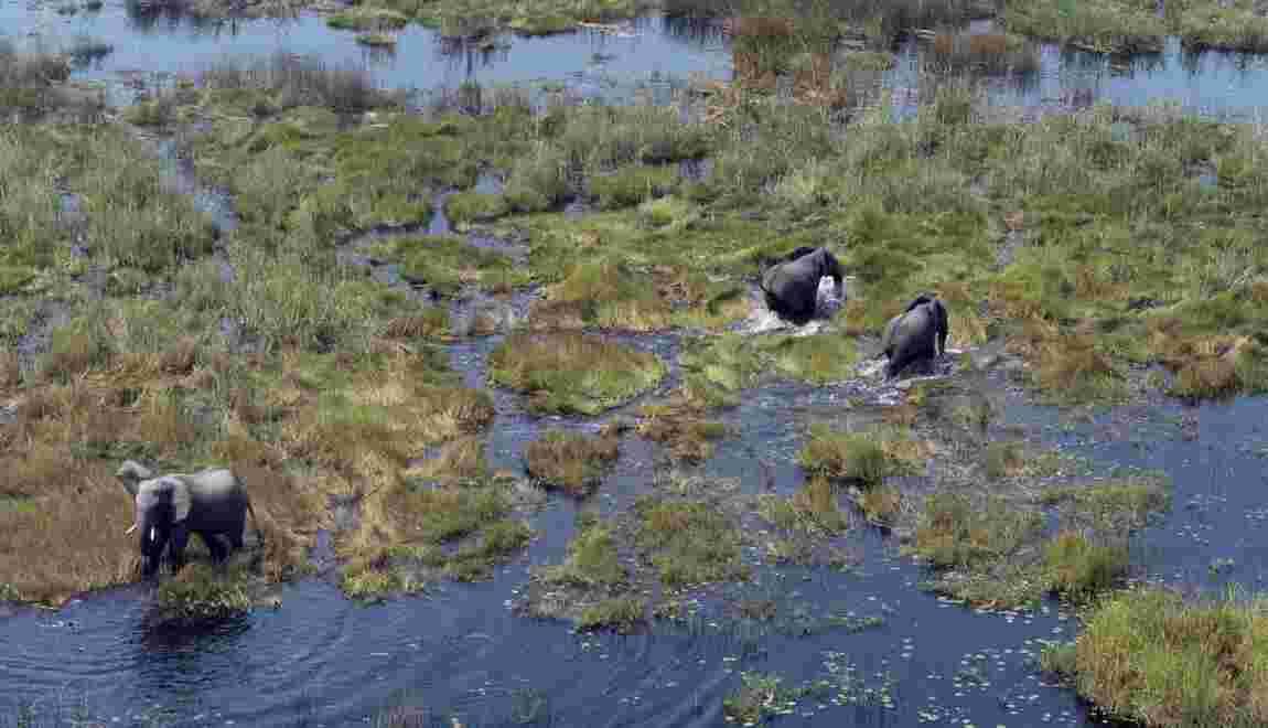 Le Botswana lève l'interdiction de chasser l'éléphant