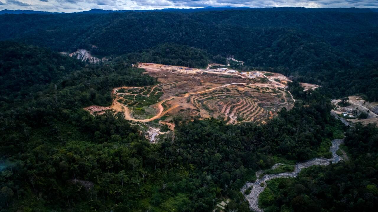 Une espèce rare d'orang-outan menacée par un barrage en Indonésie