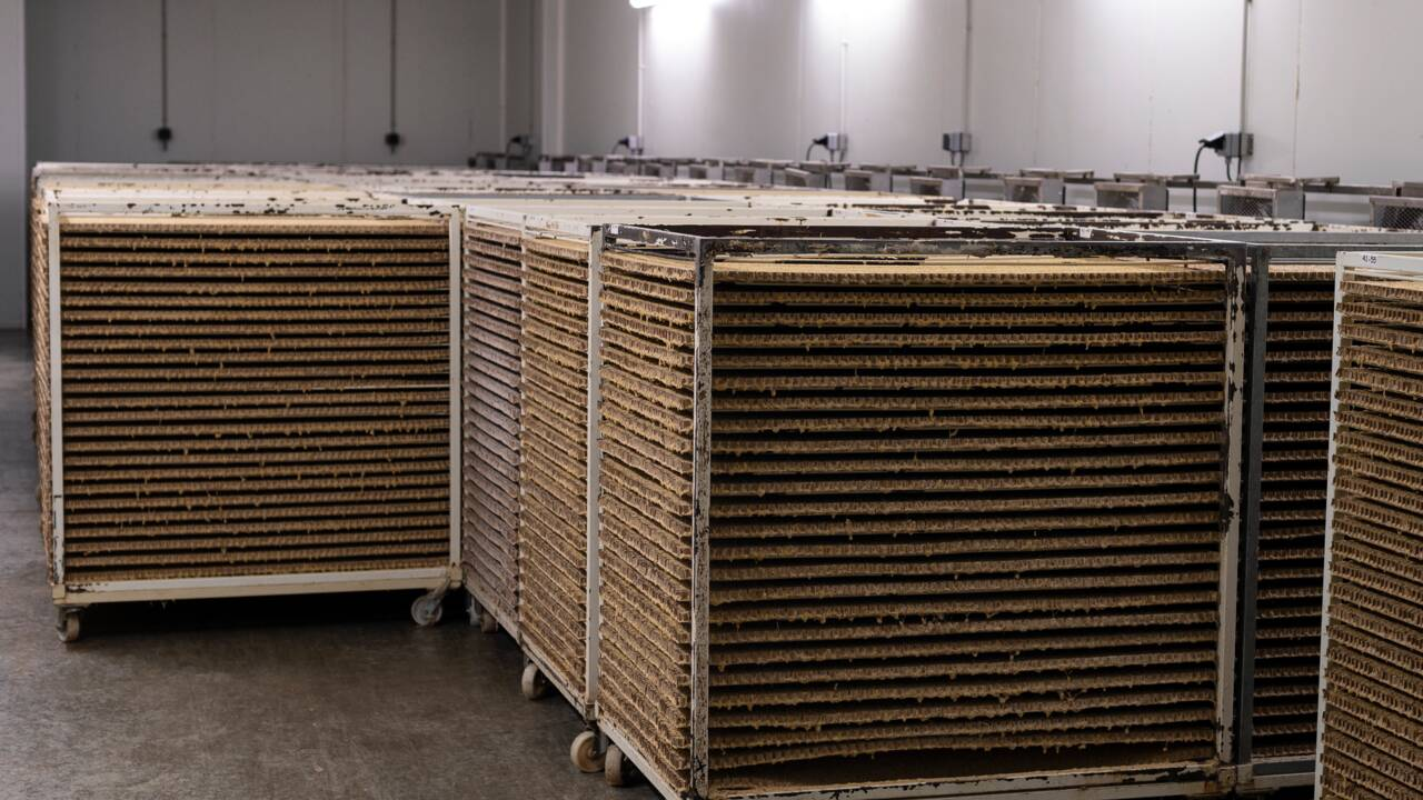 Biocontrôle: la guerre des insectes aura bien lieu