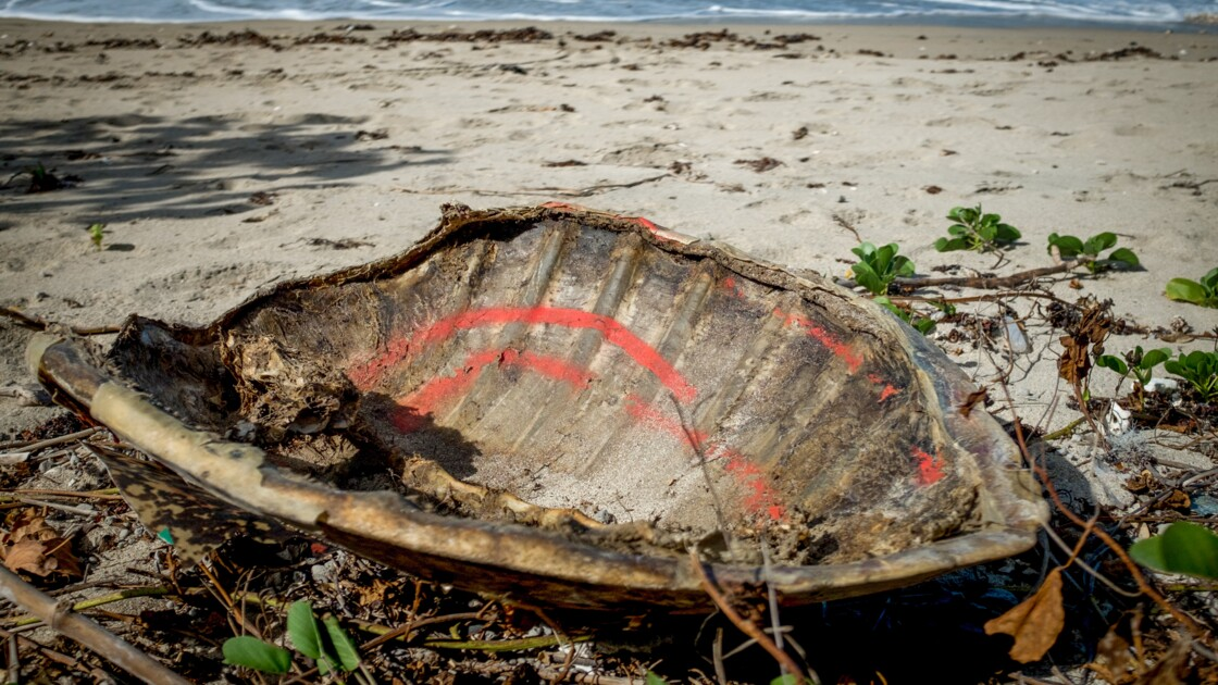 A Mayotte, recrudescence du braconnage de tortues à cause du confinement