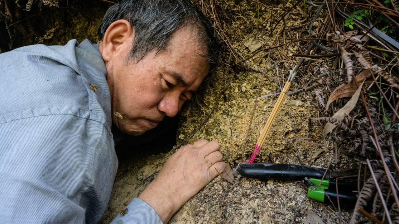 A Hong Kong, l'homme qui récoltait les abeilles à mains nues