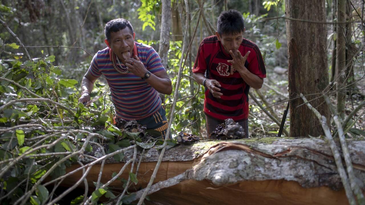 Quand la déforestation transforme l'Amazonie en baril de poudre