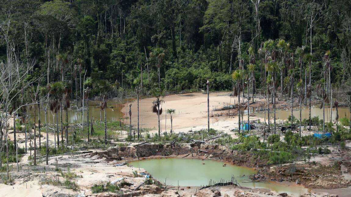 La destruction de la nature, une menace pour l'Homme autant que le réchauffement