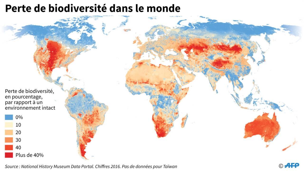 Biodiversité : état des lieux planétaire pour un besoin urgent d'agir