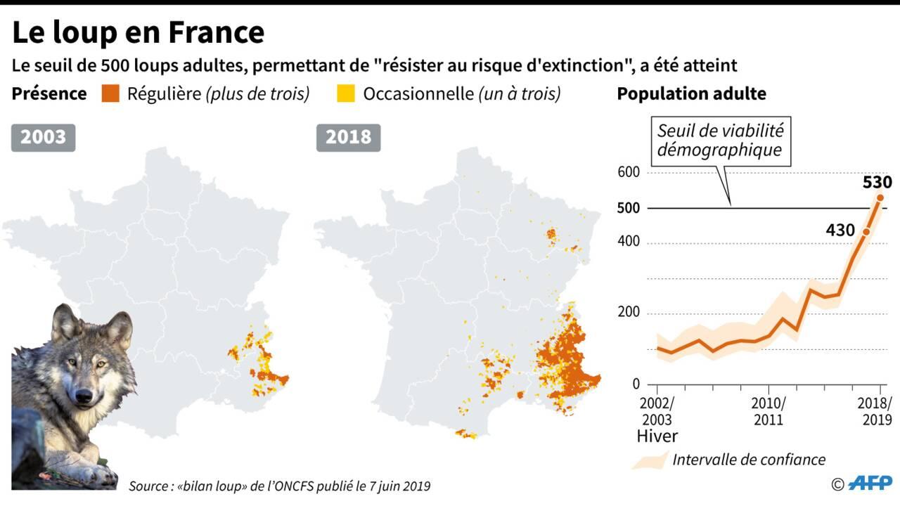La population de loups en hausse en France dépasse désormais 500