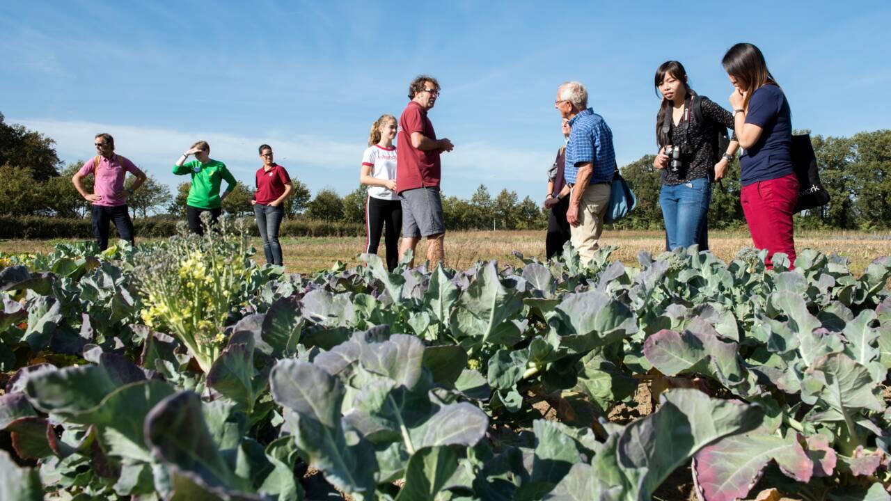 Aux Pays-Bas, des fermes d'un nouveau type face au défi climatique