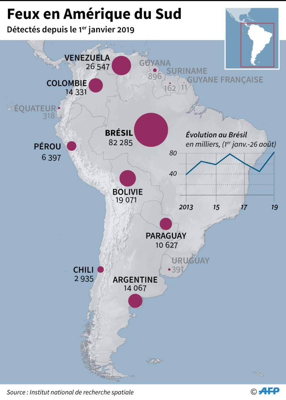 Incendies en Bolivie: pour de nombreux animaux il est déjà trop tard
