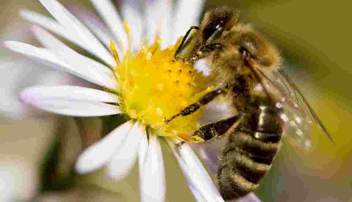 Nouveaux pesticides contestés: trois mois pour confirmer ou non l'autorisation