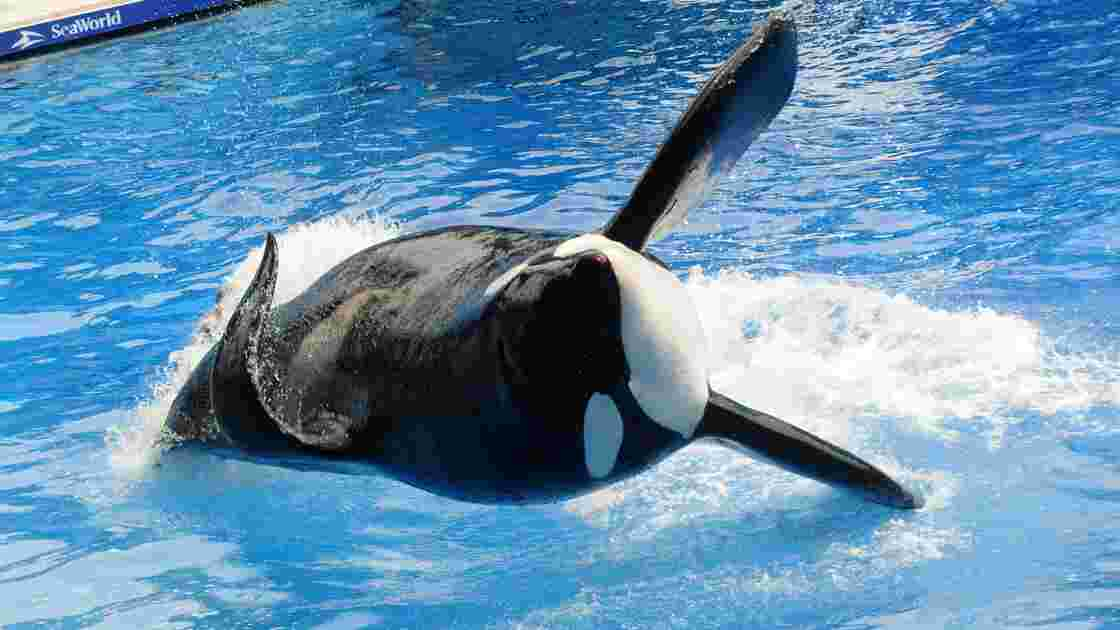 SeaWorld condamné à 4 millions de dollars d'amende pour avoir trompé ses investisseurs
