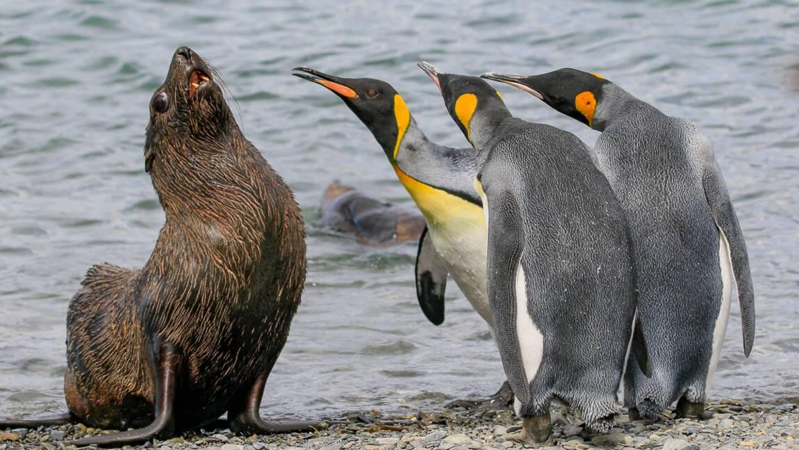 Insolite : découvrez les photos d'animaux les plus drôles de 2018