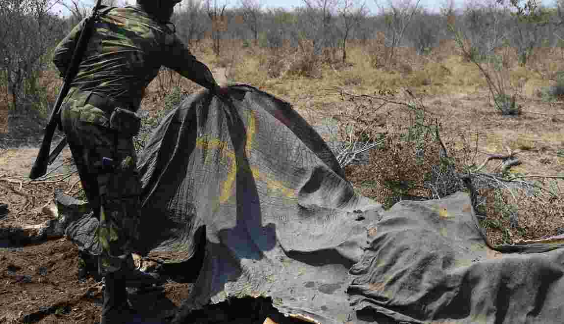 Le Botswana tente de défendre sa réputation de protecteur des éléphants