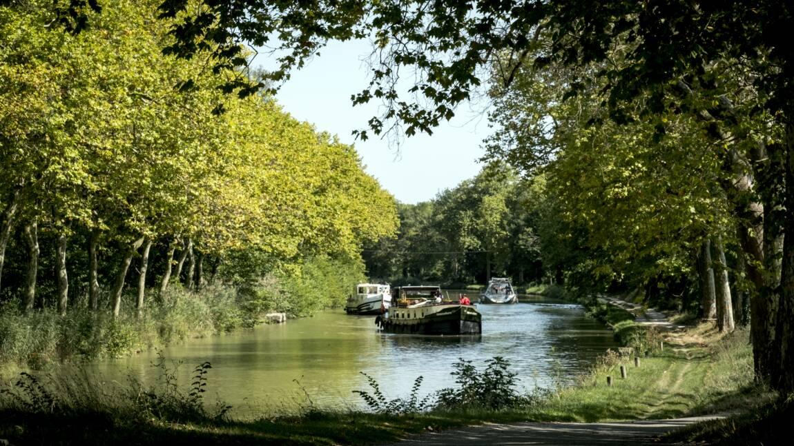 La maladie prospère sur les platanes du canal du midi, un site Unesco potentiellement menacé ?