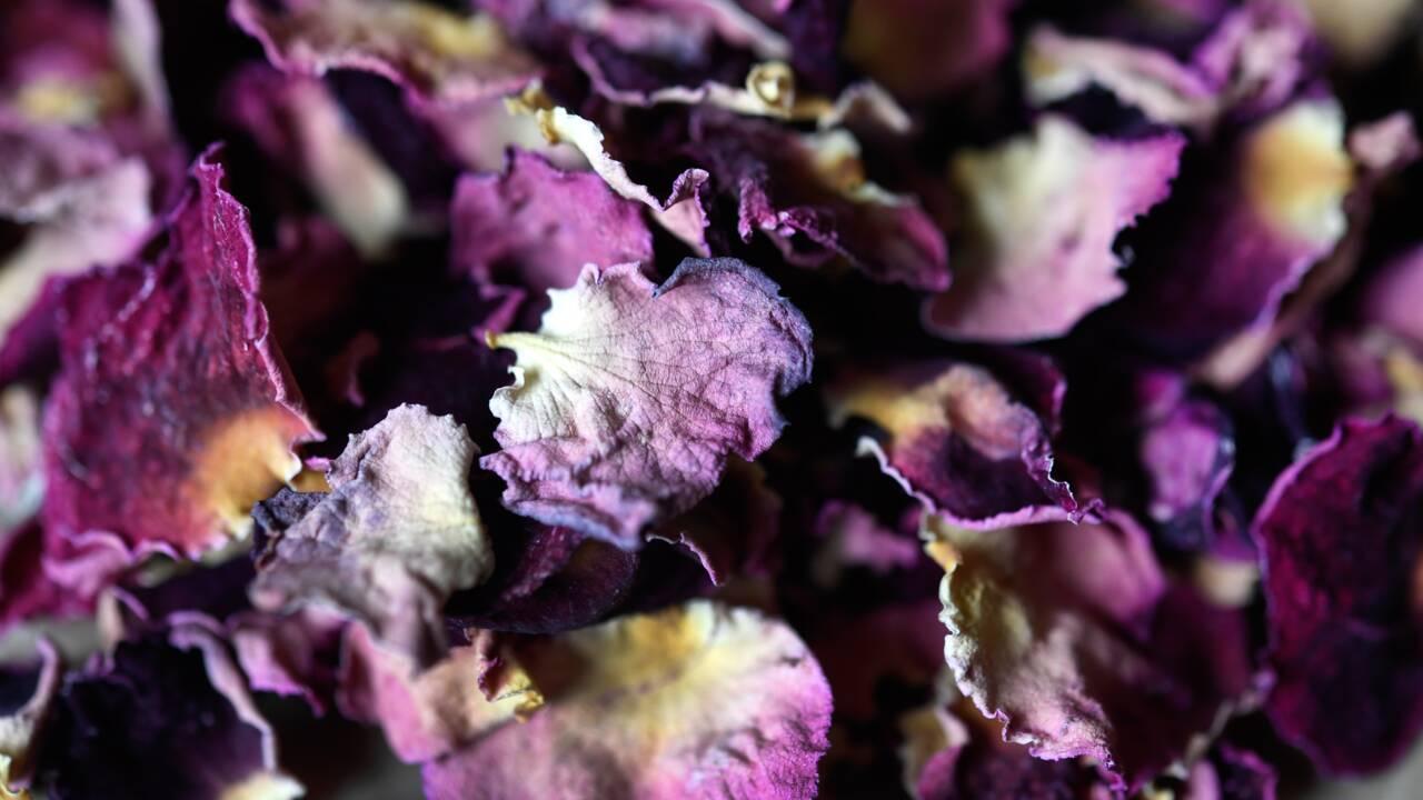 Sans existence légale, le métier d'herboriste espère une renaissance
