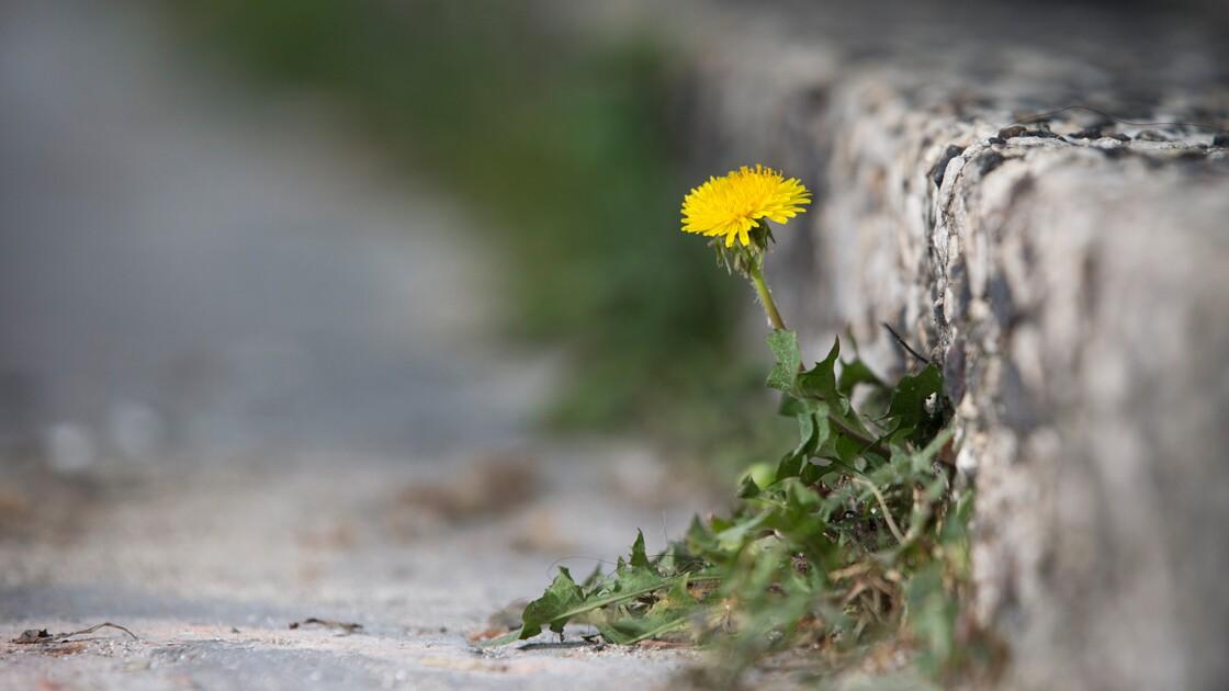 """Nathalie Machon: """"vivre avec de la végétation un peu partout"""""""