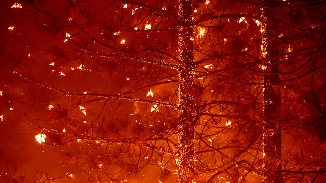 Réchauffement, scarabées et arbres morts: cocktail incendiaire pour les forêts américaines