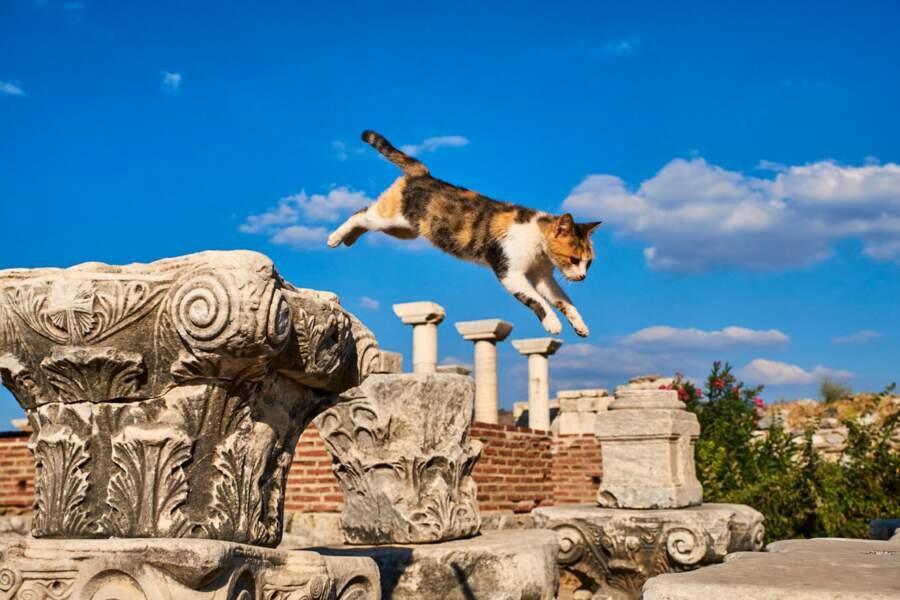 Chat volant au milieu des ruines de la basilique Saint-Jean, à Ephèse, enTurquie