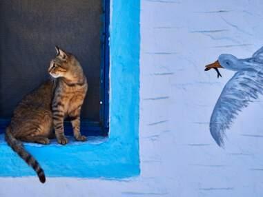 Grèce, Japon, Maroc… Les plus beaux chats du monde