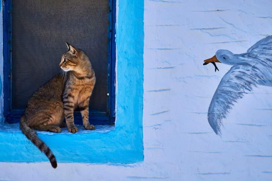 Chat des mers à Amorgos, dans les Cyclades