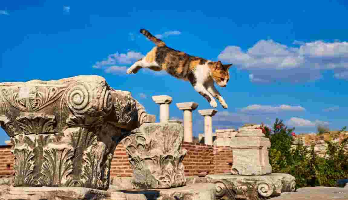 La grande odyssée des chats, un tour du monde félin