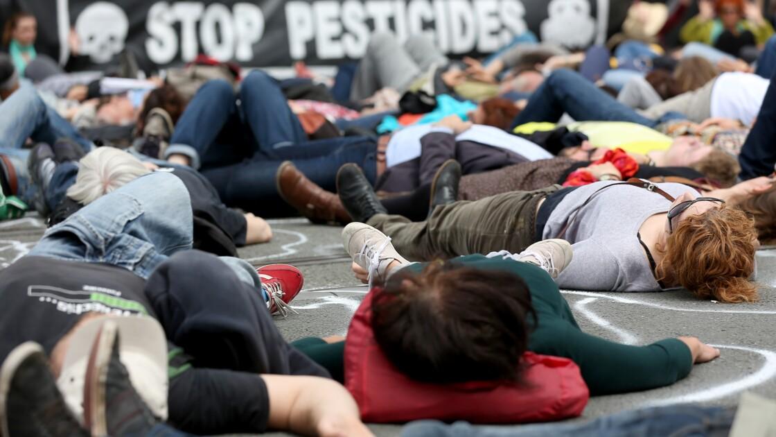 """""""Appel des coquelicots"""": 375 rassemblements prévus vendredi contre les pesticides"""