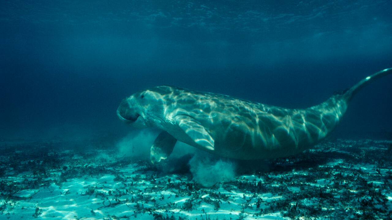 Arbres et animaux de Nouvelle-Calédonie, une arche de Noé à protéger