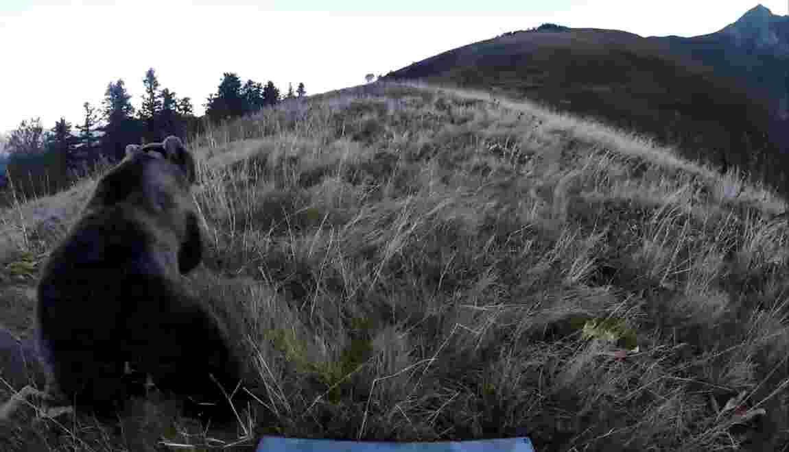 """Chef de file des éleveurs anti-ours: """"Les faire partir vers l'Espagne"""""""