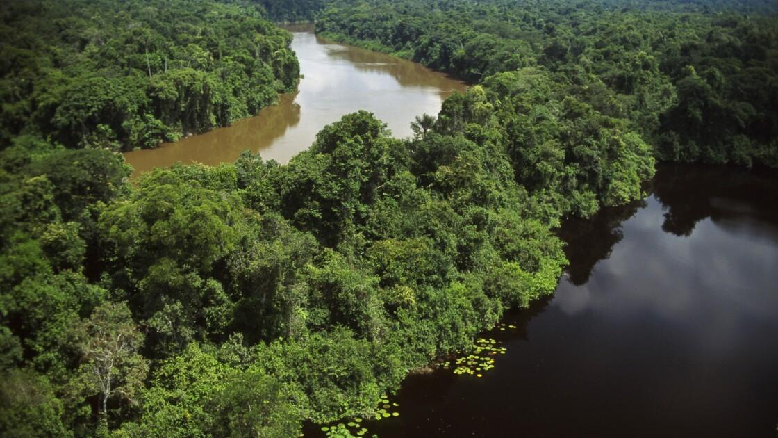 Brésil : un répit pour la forêt amazonienne ?