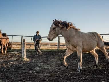 Patagonie : les gauchos, gardiens de troupeaux du bout du monde