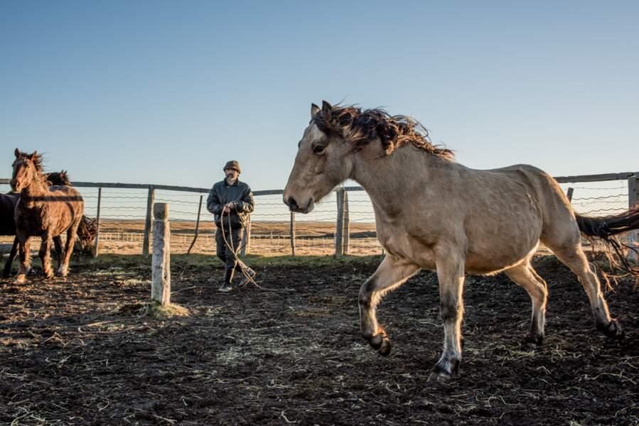 Dompteur de chevaux