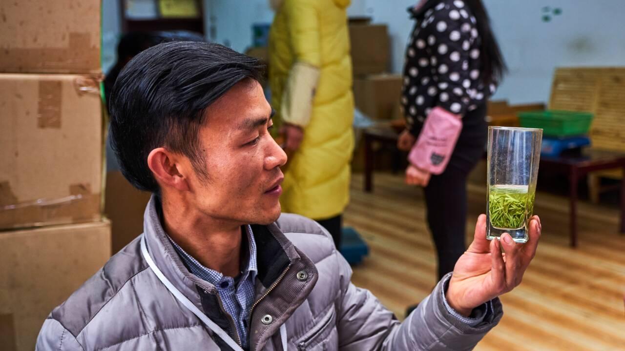 En Chine, un grand voyage dans l'empire du thé