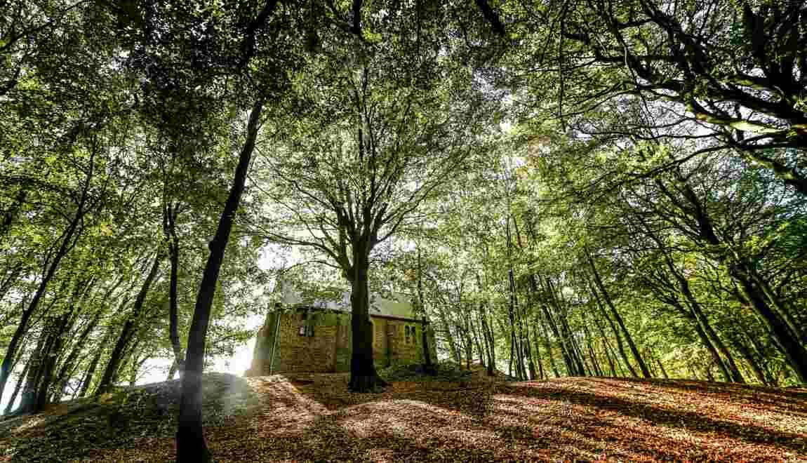 Les forêts d'Europe ne pourront pas freiner le réchauffement davantage