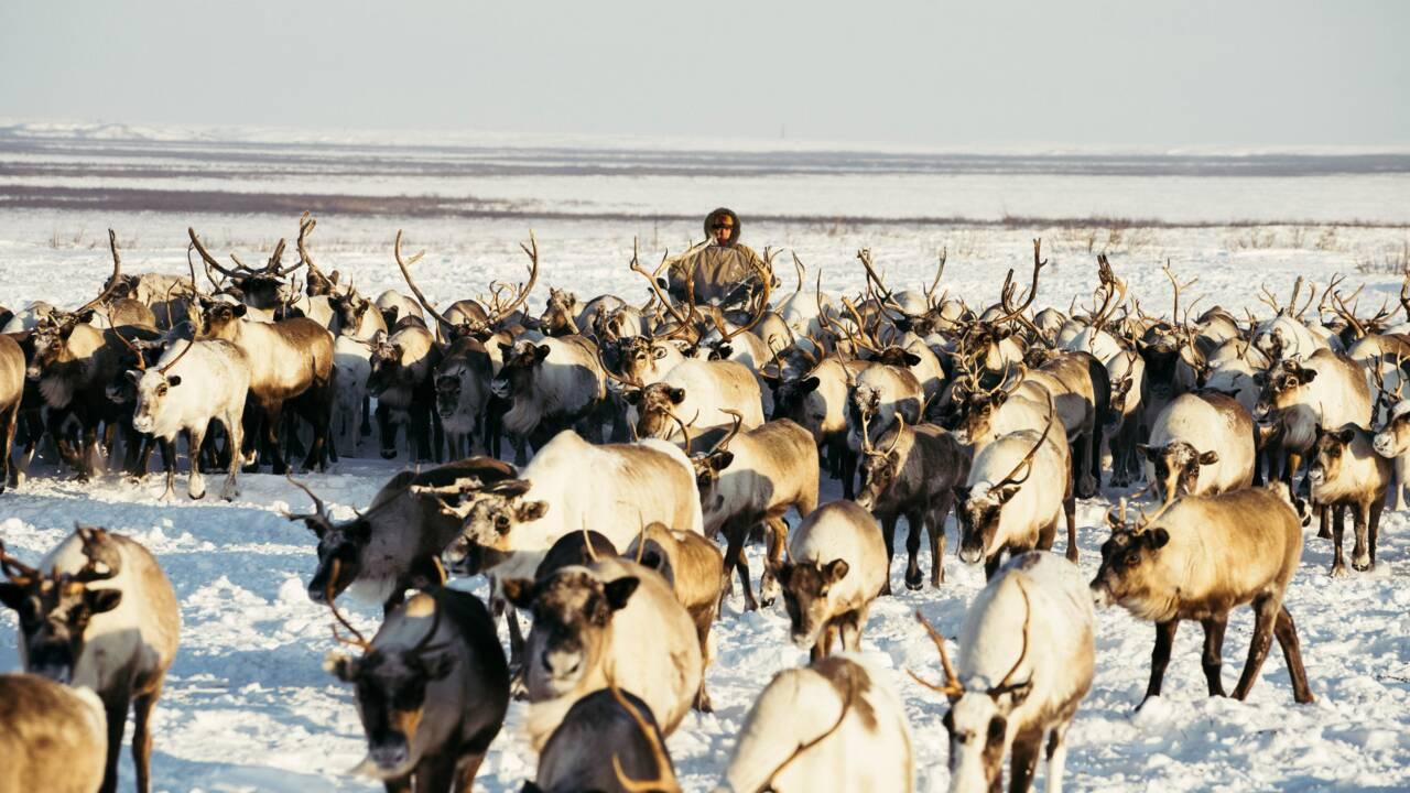 Russie : en Sibérie, la ruée vers l'or gris
