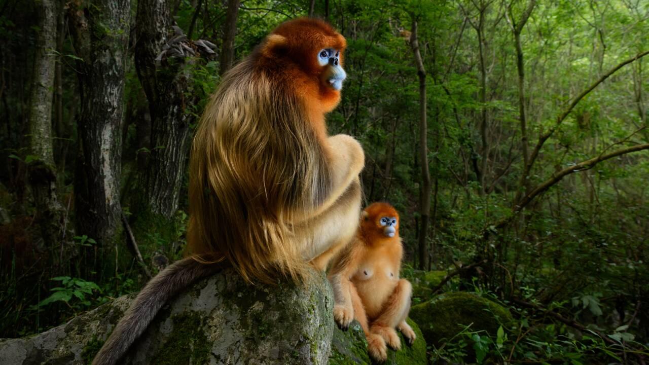 Animaux sauvages : les dessous de la photo de l'année, primée au Wildlife photographer of the year