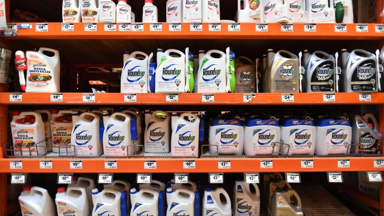"""Procès Roundup: les """"Monsanto Papers"""" dévastateurs pour la défense"""