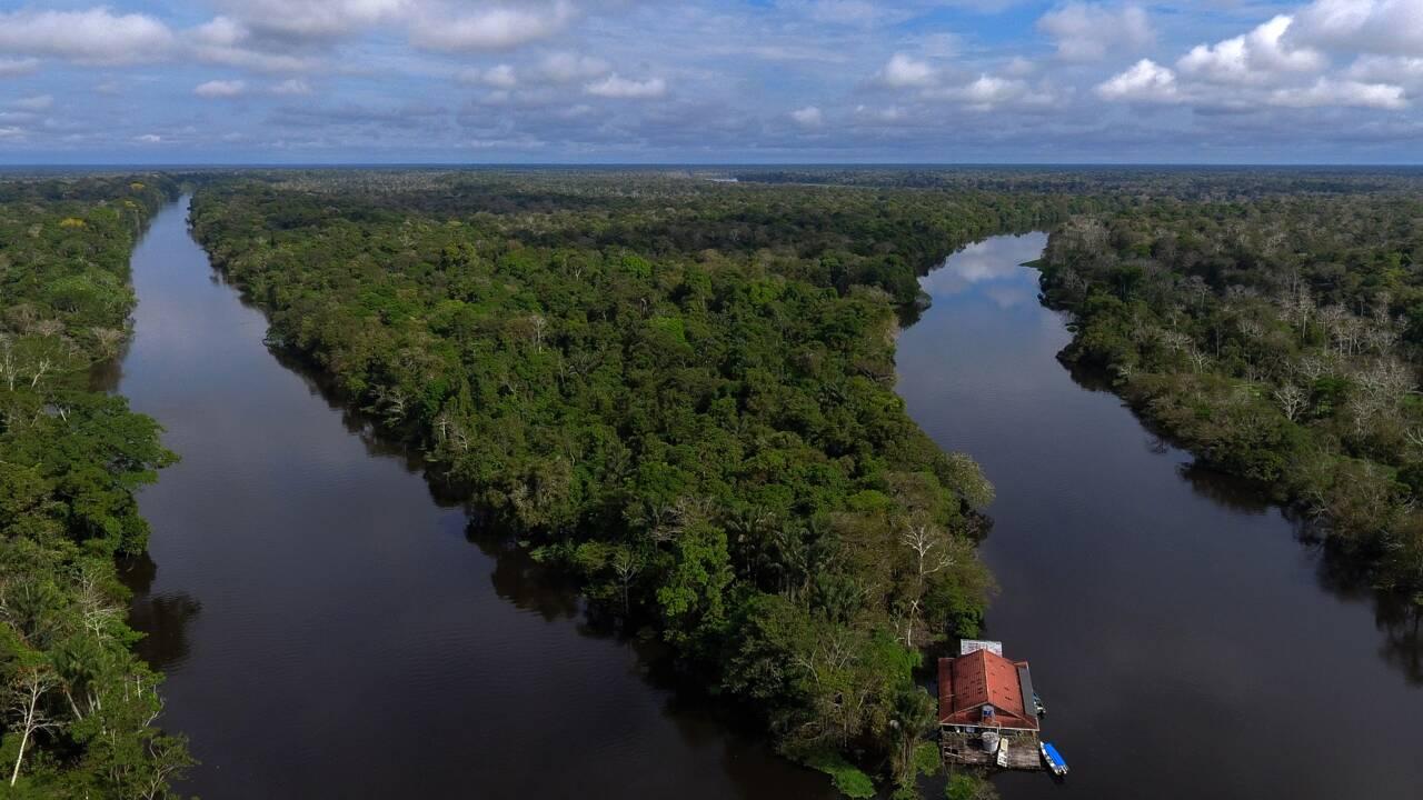 """Providence, un """"Big Brother"""" pour surveiller la biodiversité en Amazonie"""
