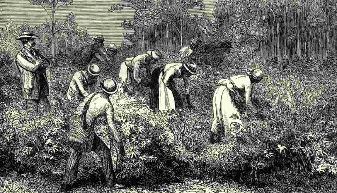 L'Underground Railroad, le réseau clandestin américain qui sauva des esclaves au XIXe siècle