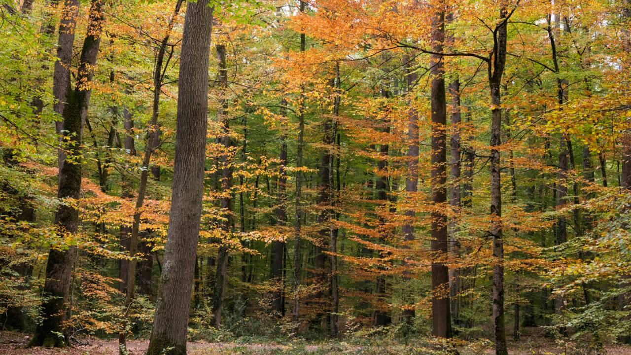 """Des forestiers rassemblés dans l'Allier contre l'""""industrialisation"""" de la forêt"""