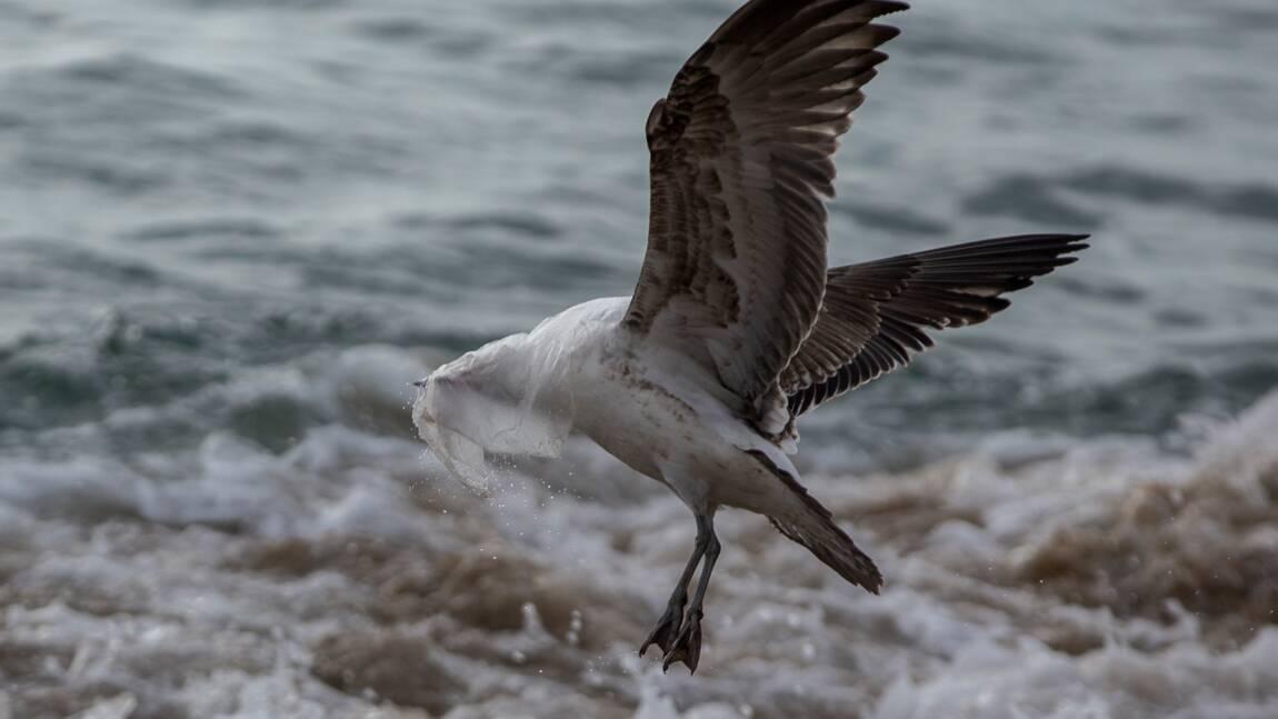 L'UE promet 300 millions d'euros de plus pour protéger les océans