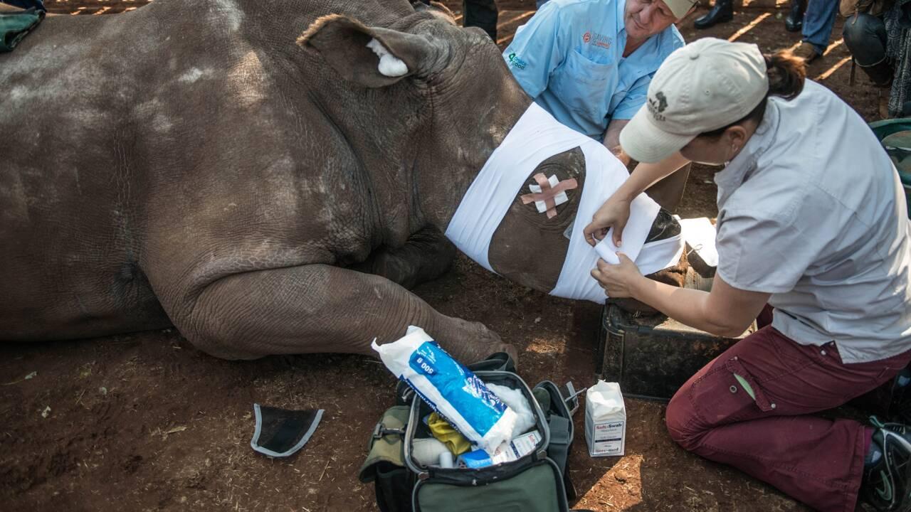 Chine: tigres et rhinocéros réautorisés à la vente, colère des écologistes