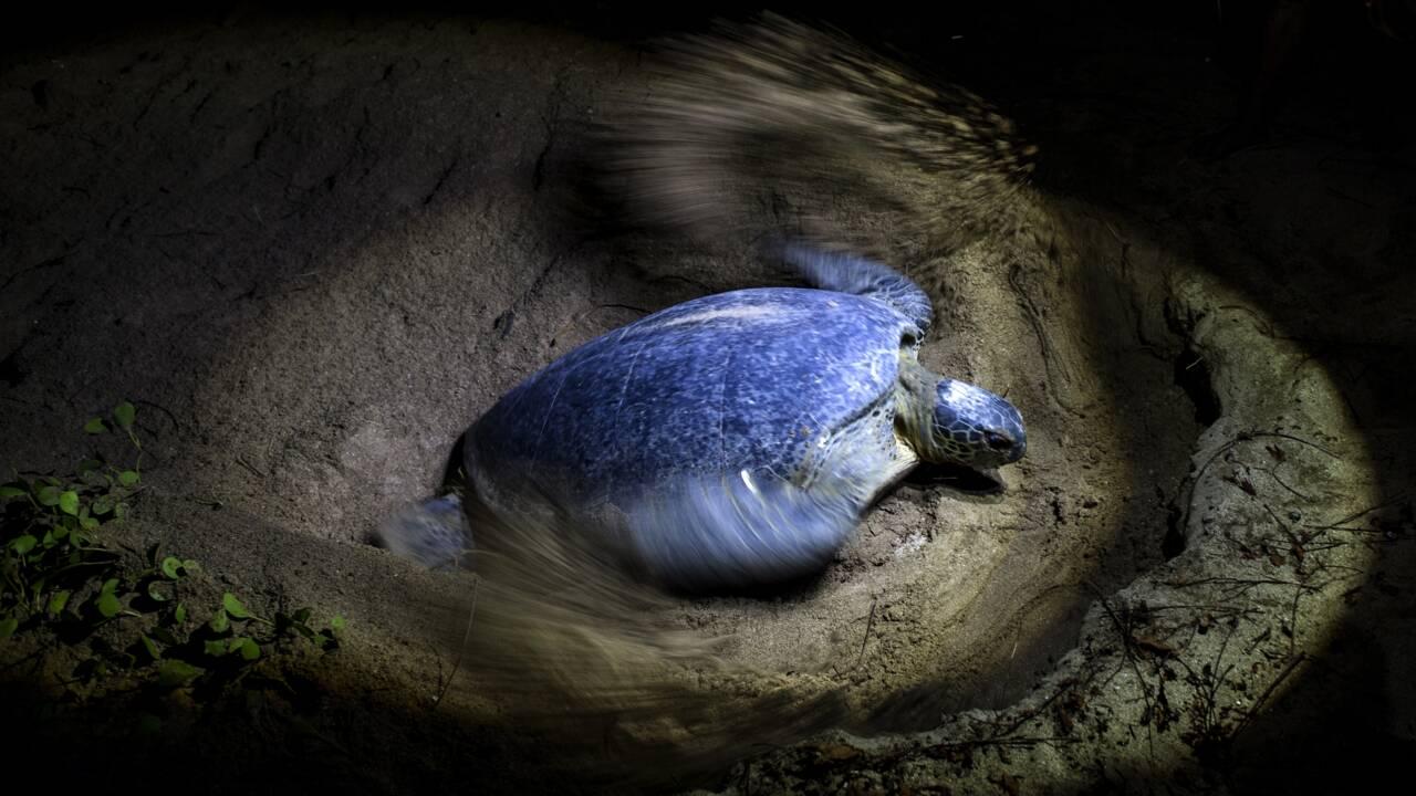 Combat pour sauver les tortues de mer en Birmanie